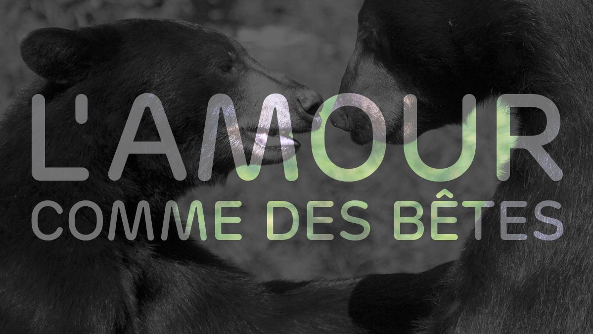 Titre - L'amour comme des bêtes'
